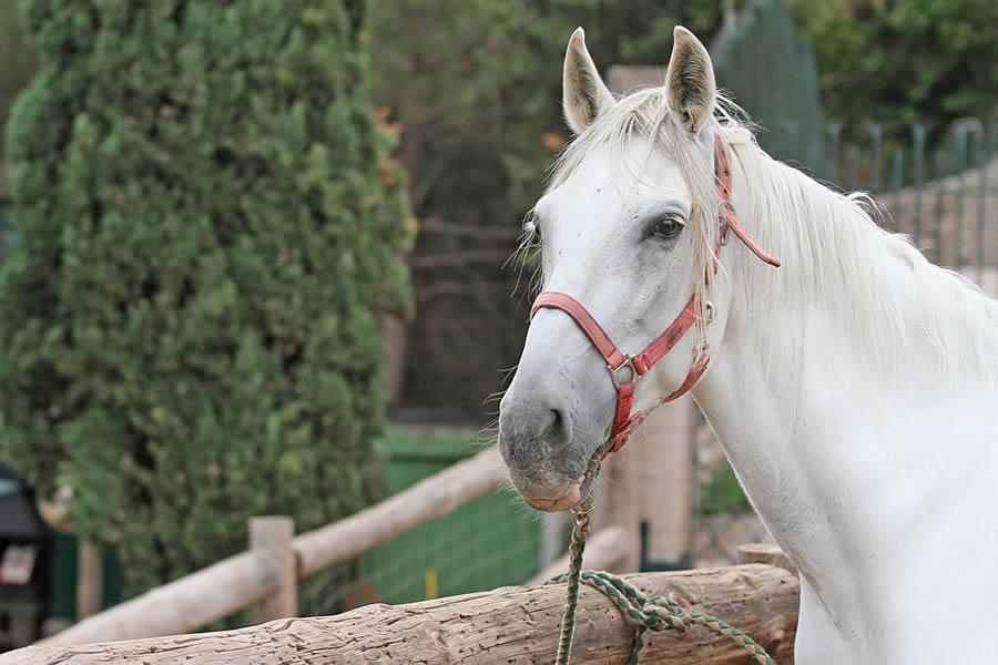 per-que_amb_cavalls